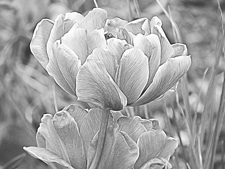 Black and White tulip_glow whisker wires_resize
