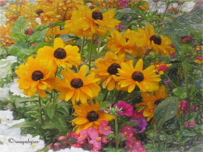 Blackeyed Susans Van Gogh II_Topaz
