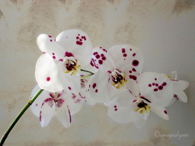 Orchids with Texture