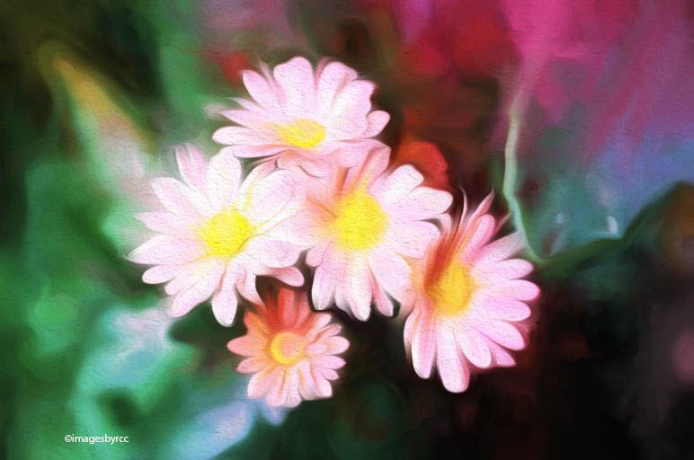 little-daisies_2