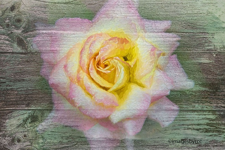 rose-in-oil_painted-on-wood