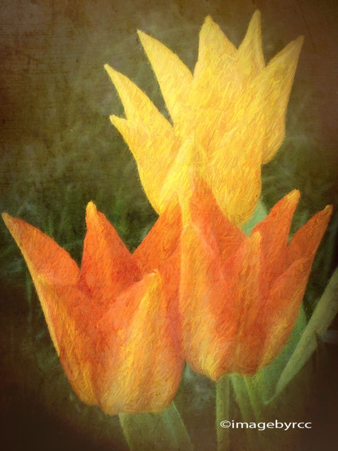 tulips-with-a-rustic-look